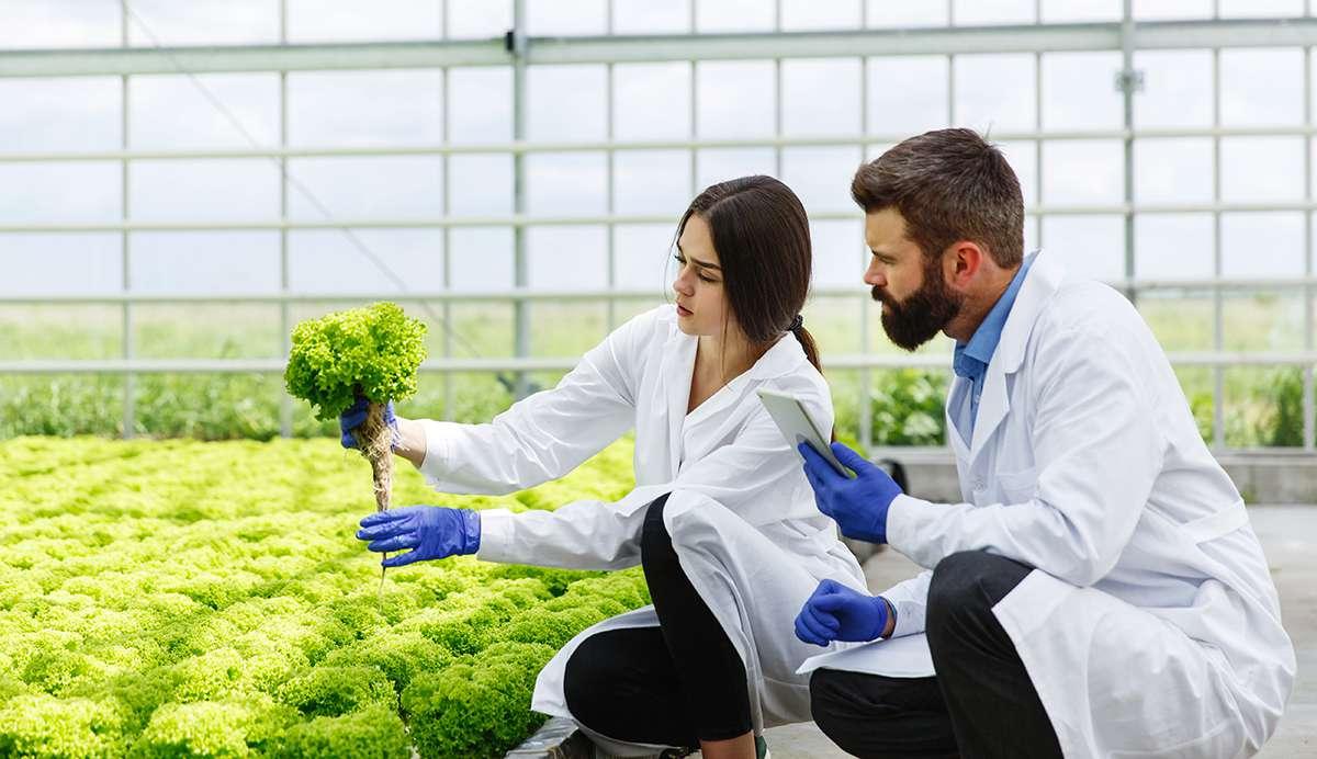 Агрохимия / Удобрения / Семена